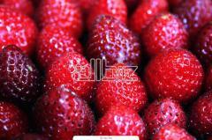 فراولة مجمدة