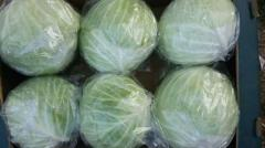 Fresh cabbage (red - white - green)