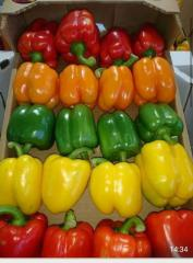 Fresh color capsicum (red - green - yellow)