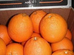 Fresh citruc oranges