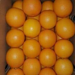 Валенсия апельсины
