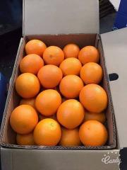 Navel Oranges sizes: