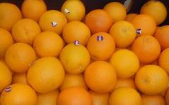 Valencia orange export