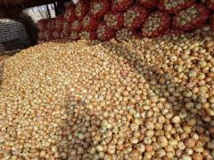 Fresh Golden Yellow onion - лук - новый урожай -
