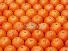 Valencia orange