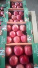 pomegranate **grenade**الرمان
