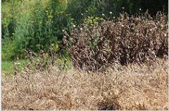 مبيدات الاعشاب