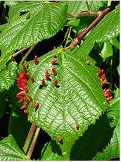 Acaricides