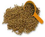 Seeds of industrial crops