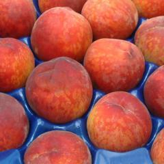 Peaches and Nectarines