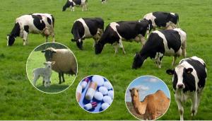 Veterinary medication
