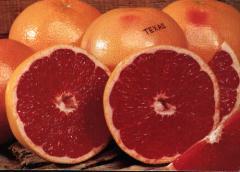 فاكهة غريبة