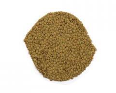 Grain for germination