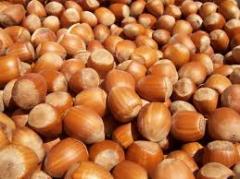Peel hazelnuts grits