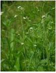 Treating herbs
