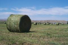 Animal feed hulling bran