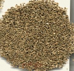 Asimina seeds