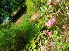 Seeds of medicinal plants
