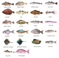 مأكولات بحرية