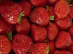 Strawberry seedlings