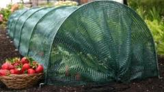 Thermal insulation for greenhouses