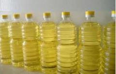 بذور اللفت النفط