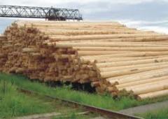 Wood zinked