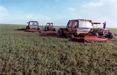 Fertilizer placers (mineral fertilizer)