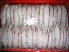 Fishes angelfish