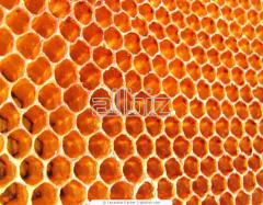 Royal jelly in queen cells