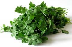 Coriander Herb Essential Oil