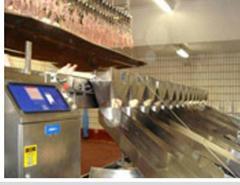 معدات انتاج عملية لحوم الدجاج