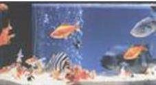 Acars (fish)