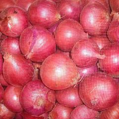 تصدير البصل