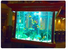 Accessories for aquarium