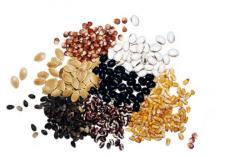 Balsam seeds