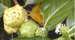 Herbal mixtures