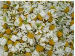 Flower of daisies