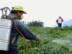 المبيدات