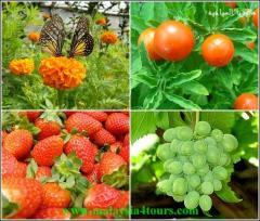 تصدير - توزيع و توريد افضل الخضر و الفواكهه...