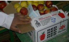 تغليف وتعبئة الخضار والفاكهة المصرة