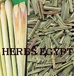 Tea on the basis of medicinal herbs