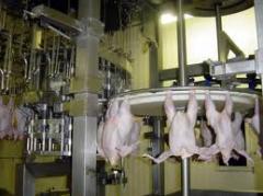 ذبح جميع انواع اللحوم