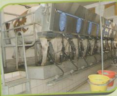 صناعة  السمن البقرى