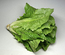 Cabbage lettuce