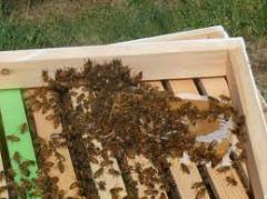مغذيات لخلايا النحل