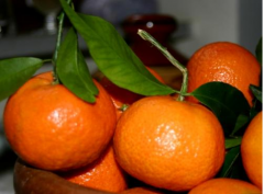 Tangerine Bonsai