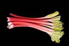 Vegetable rhubarb