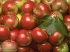 Small-fruited apples