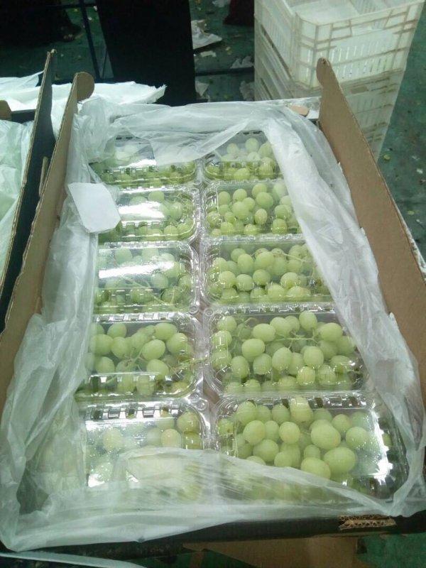 seedless_white_grapes_superior